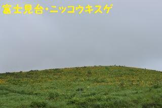 150719-k6.jpeg